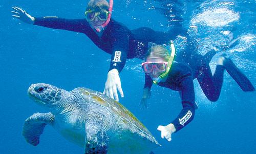 Englischkurs und Tauchen, Surfen oder Yoga in Australien, in Byron Bay