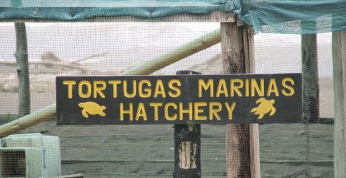 Lateinamerika Praktikum in Costa Rica