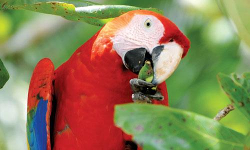 Schüleraustausch in Costa Rica - Privatschulen