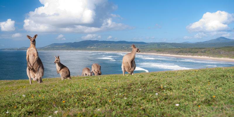 Englisch lernen und Surfen in Australien