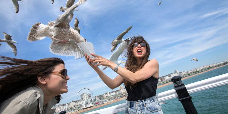 Sprachreise für Erwachsene nach Brighton
